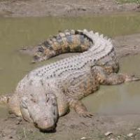 A Kayaking encounter with a Crocodile – (I survived the deadly Puk-Puk)