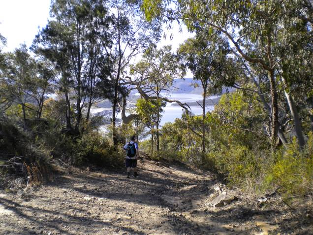 Ray approaching the Hawkesbury River