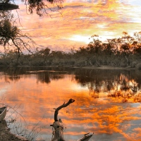 Dawn over the Billabong, and not a care in the world...