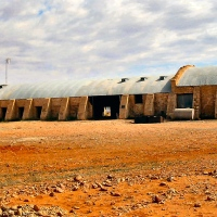Strewth, now that's a woolshed! (Cordillo Downs)