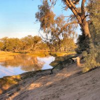 Cooper Creek, Outback Australia (An oasis in a barren land)