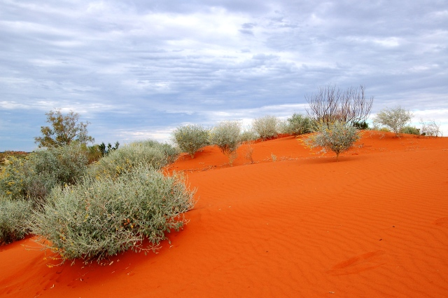Red Sand dune - Welford NP
