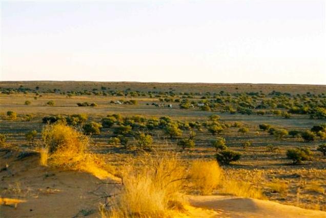 Simpson Desert, Central Australia