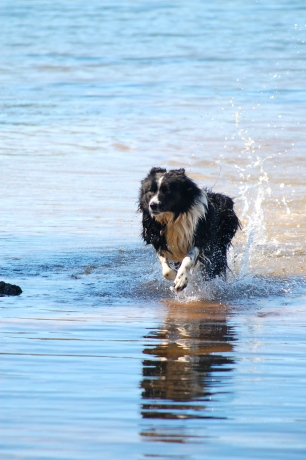 MilO - The Wonder Dog