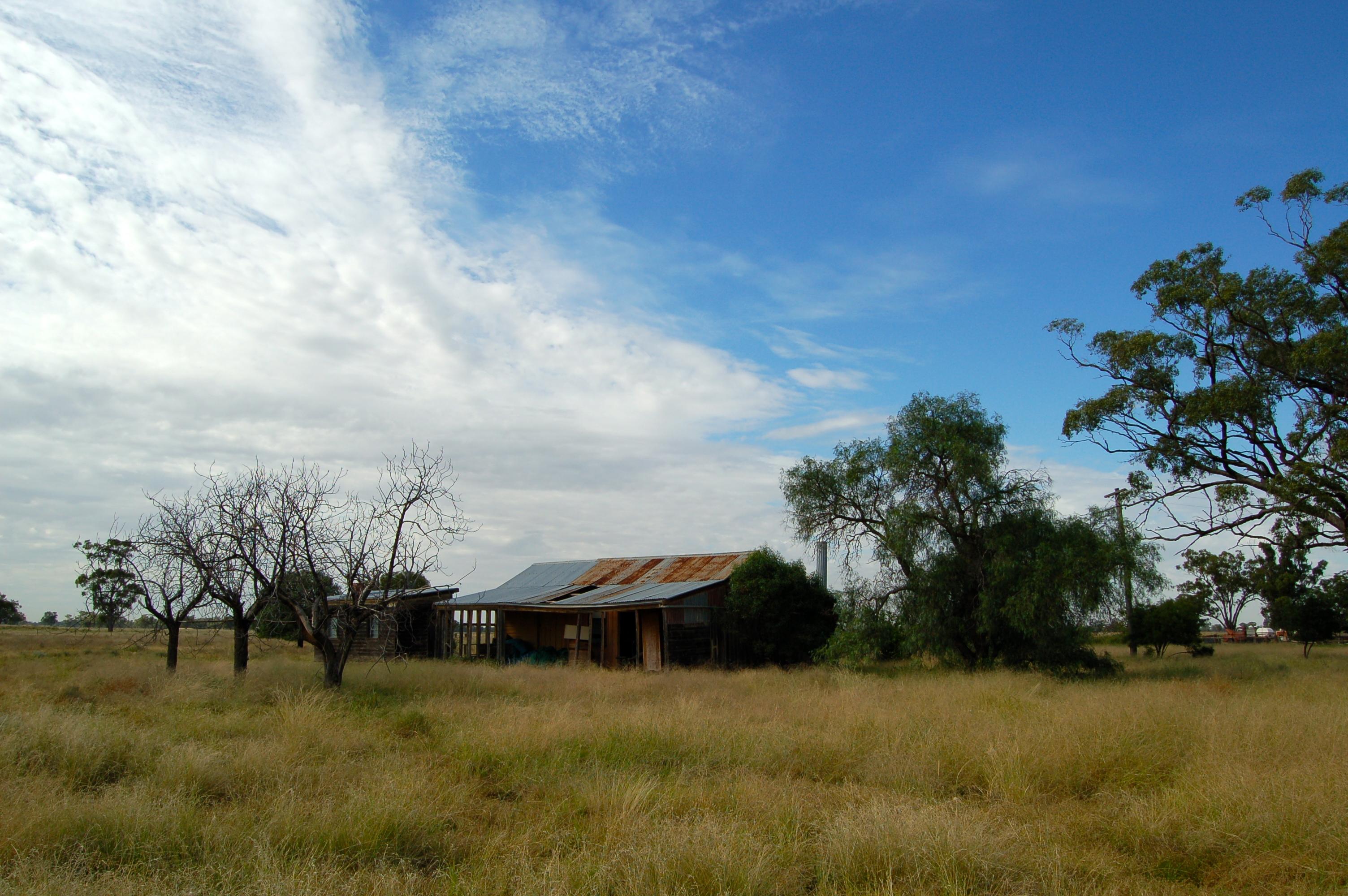 Grasslands of the Western Plains (Outback Australia)
