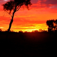 The Australian Outback (At Sunset)