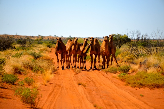 Gibson Desert, Outback Australia