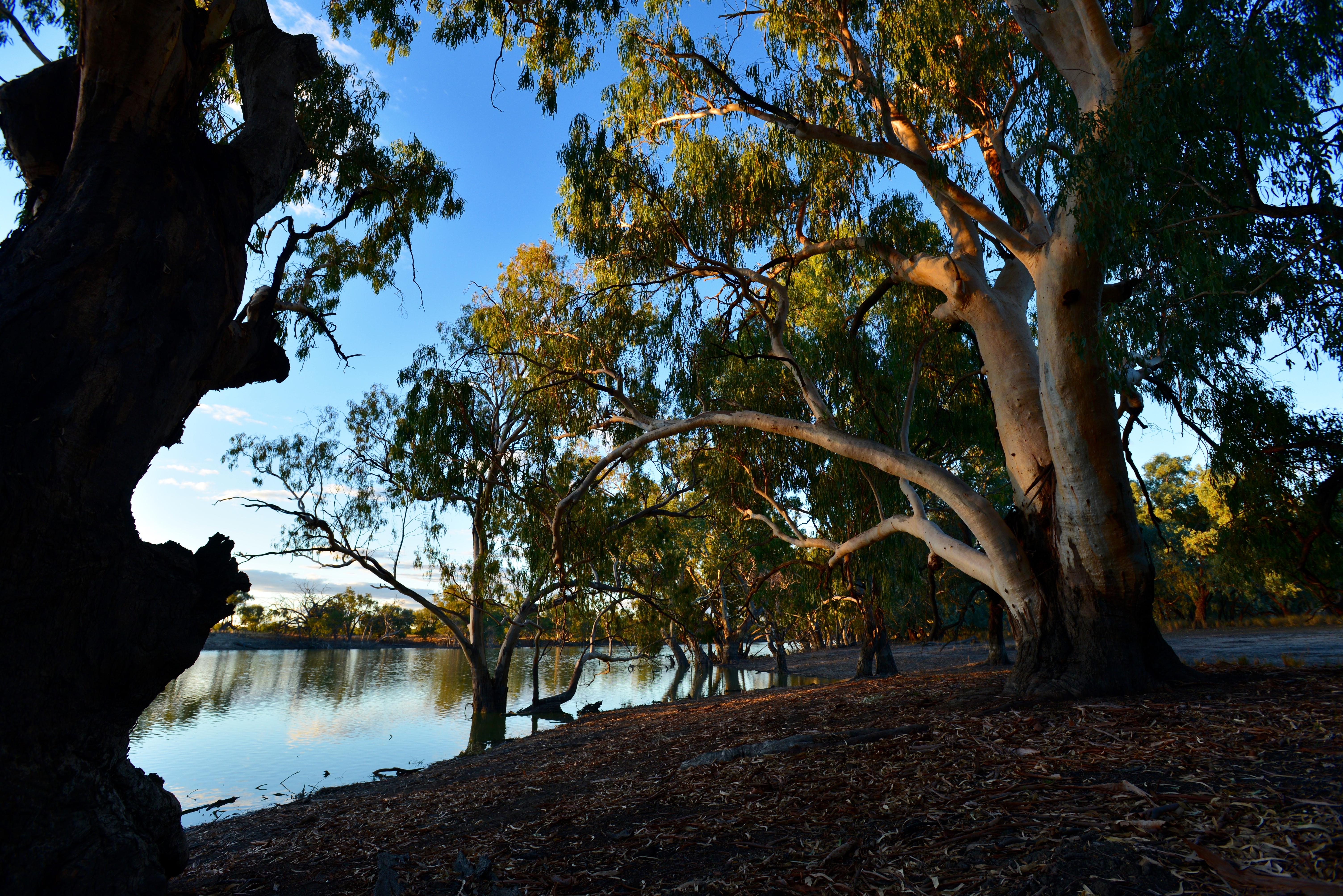 Australian waterhole