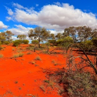 Nature's Canvas - The Australian Outback