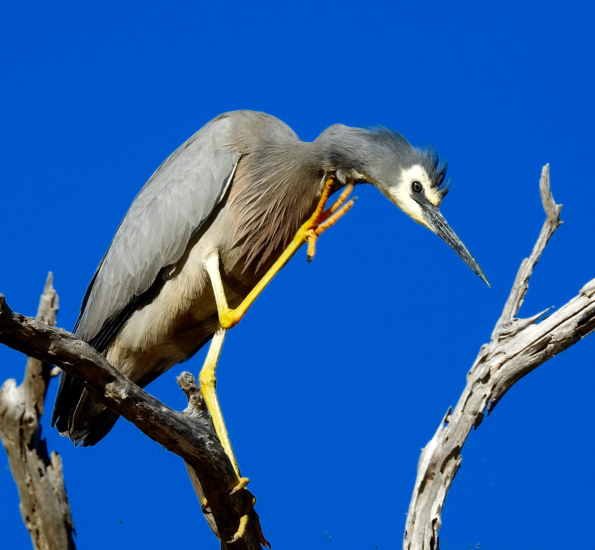 нашем картинки с названиями птиц австралии торца
