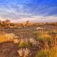 A vibrant desert landscape - Australia's Outback