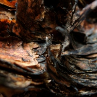 Burnt Bark  -  in the Australian Outback