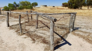 rabbit proof fence