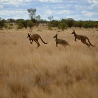 Life, in the Australian Bush...