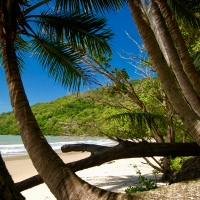 Cape Tribulation – where the rainforest meets the reef…