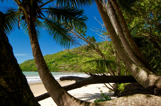 Cow Bay, Cape Tribulation